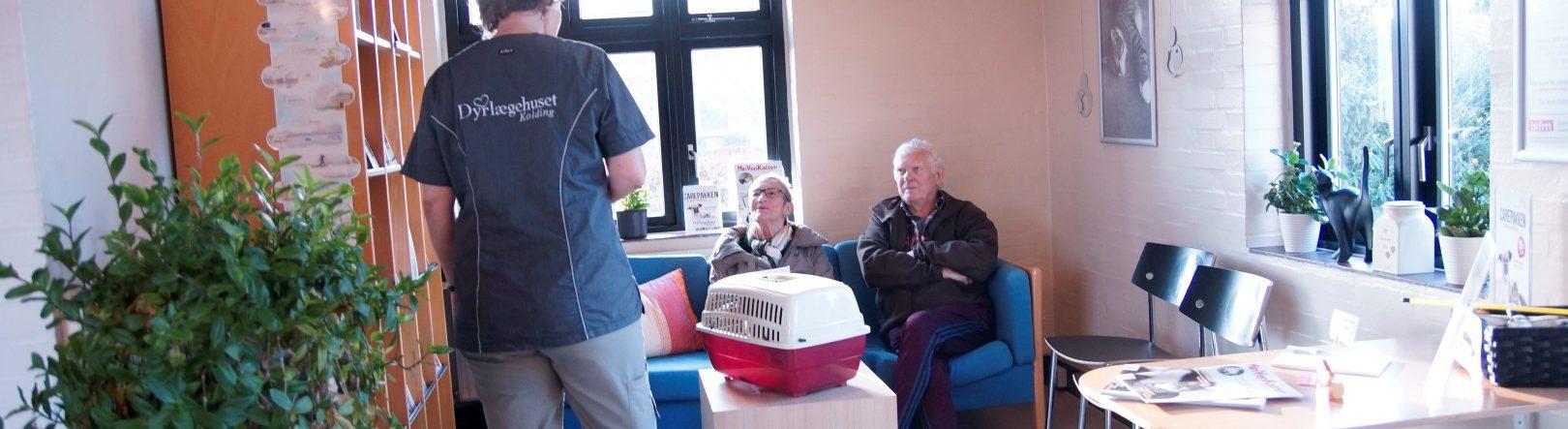 Kattevenlig klinik i Kolding – et trygt valg for din kat | Dyrlægehuset Kolding
