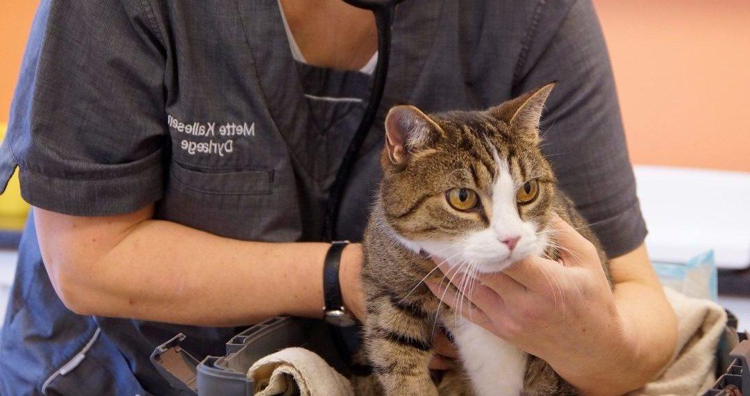 Dyrlægehuset Kolding – Din lokale dyrlæge i Kolding