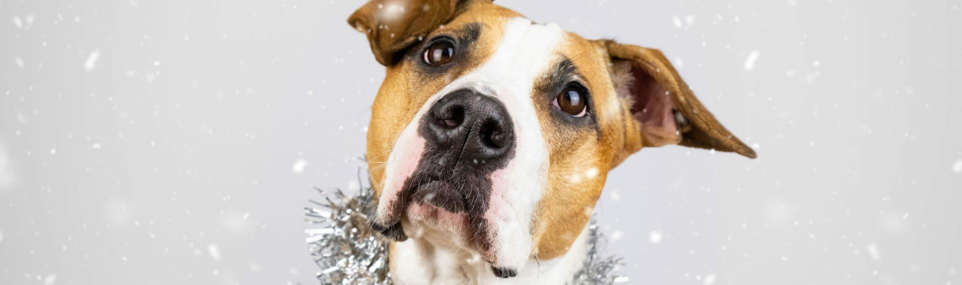 Nytår – Sådan hjælper du din hund » Læs mere her| Dyrlægehuset Kolding