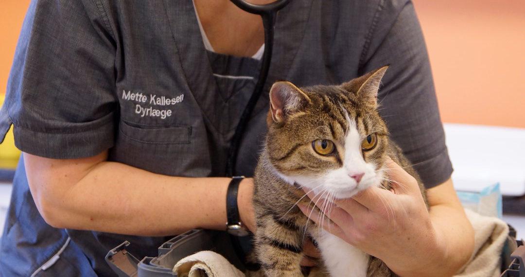 Din lokale dyrlæge i Kolding – ægte omsorg | Dyrlægehuset Kolding