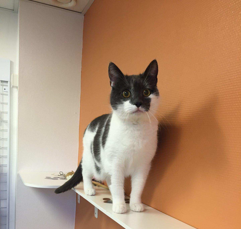 Neutralisation af kat i Kolding – Kastration af kat | Dyrlægehuset Kolding