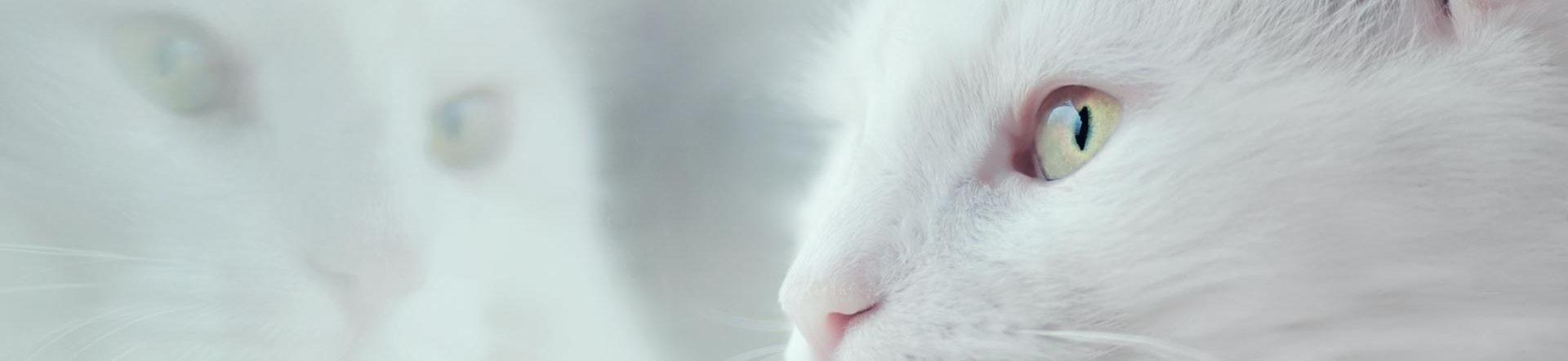 Aflivning af kat i Kolding – tryg og omsorgsfuld | Dyrlægehuset Kolding