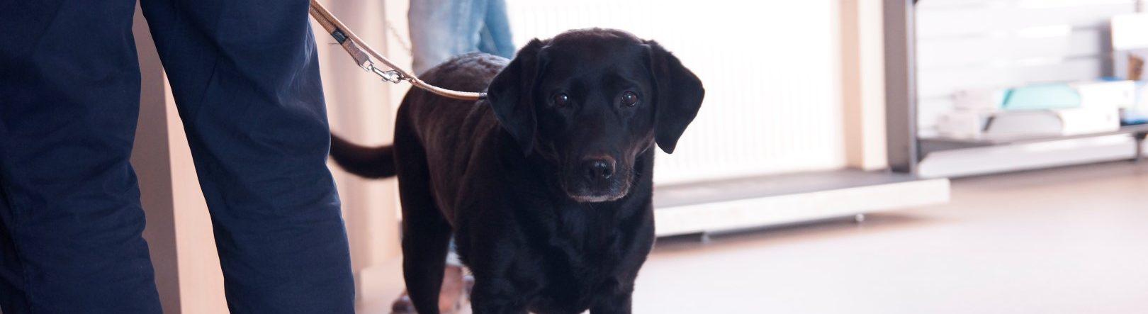 Dyrlæge Kolding – behandling af hund | Dyrlægehuset Kolding