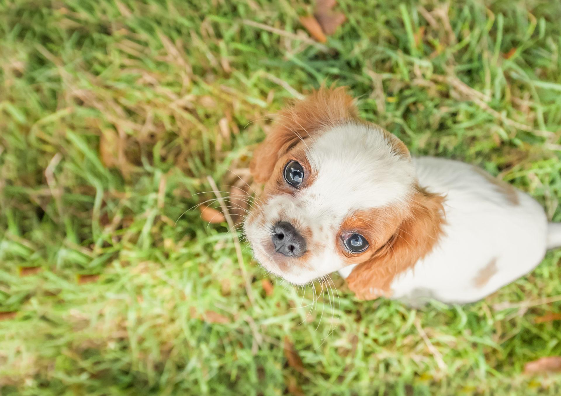 Sterilisation af hund | Dyrlægehuset Kolding