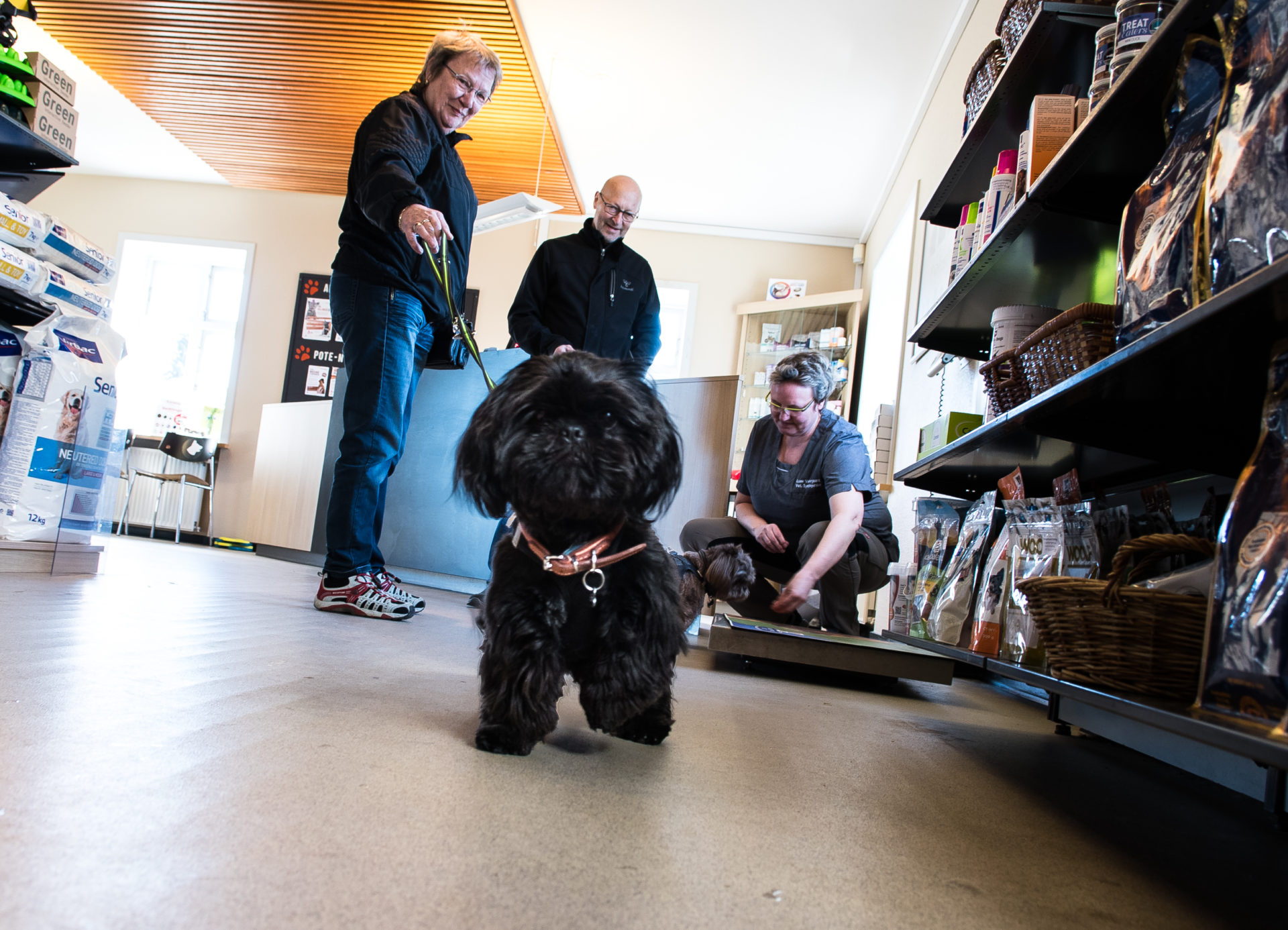 Vaccination af hund i Kolding – forebyg sygdomme | Dyrlægehuset Kolding