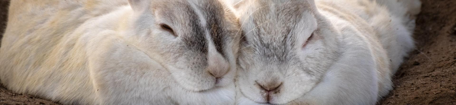 Aflivning af kanin i Kolding – tryg og omsorgsfuld | Dyrlægehuset Kolding