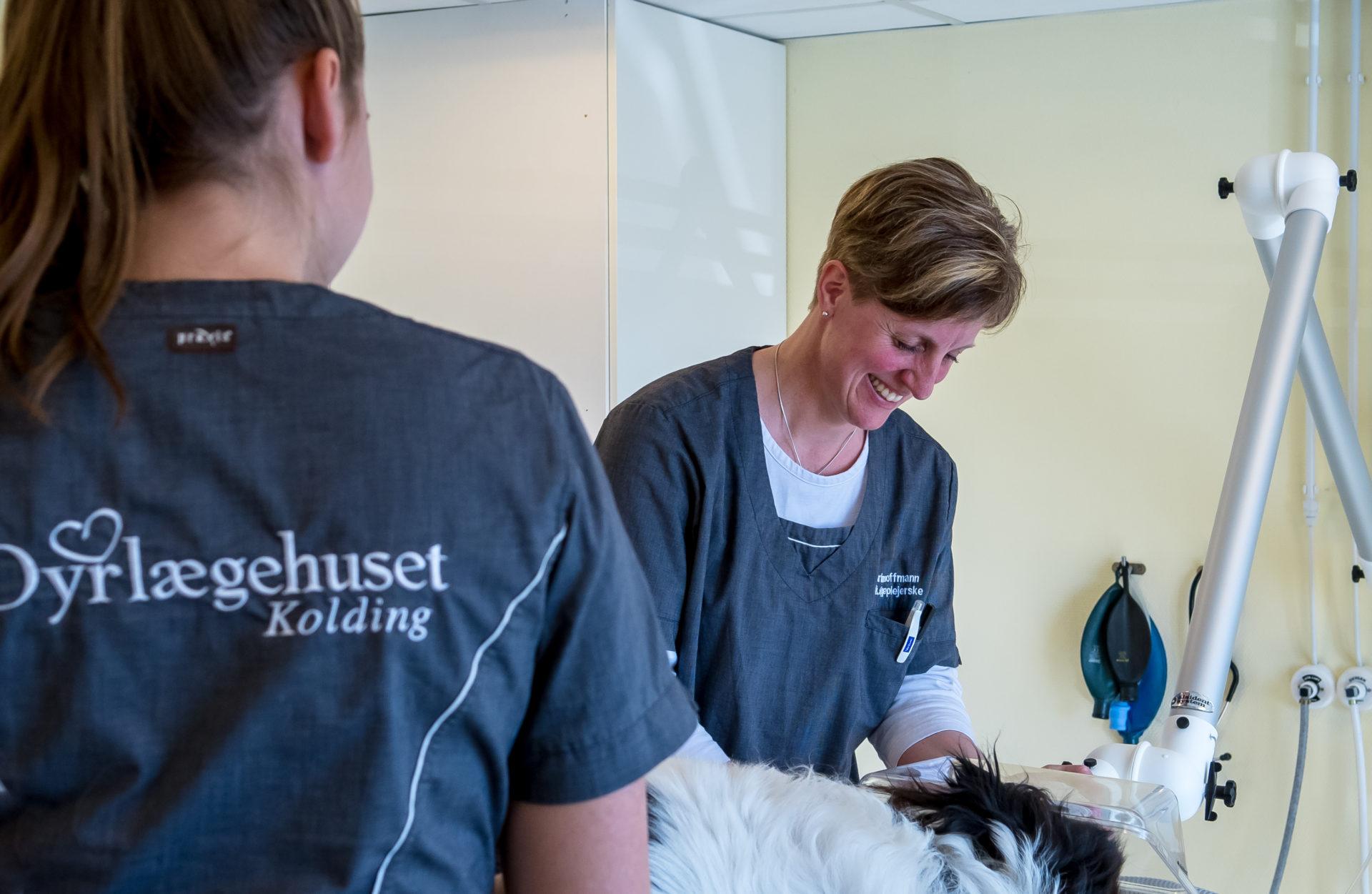 Effektiv flåtbehandling af hund | Dyrlægehuset Kolding