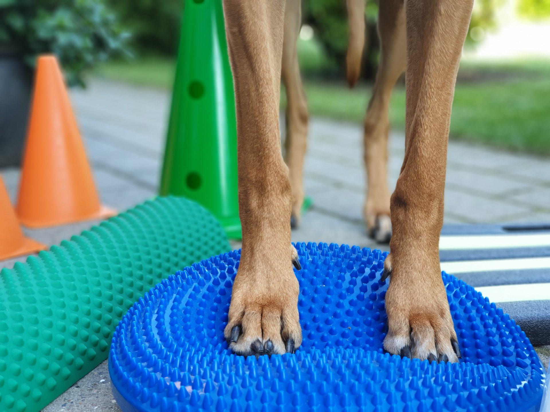 Skånsom genoptræning af hund | Dyrlægehuset Kolding