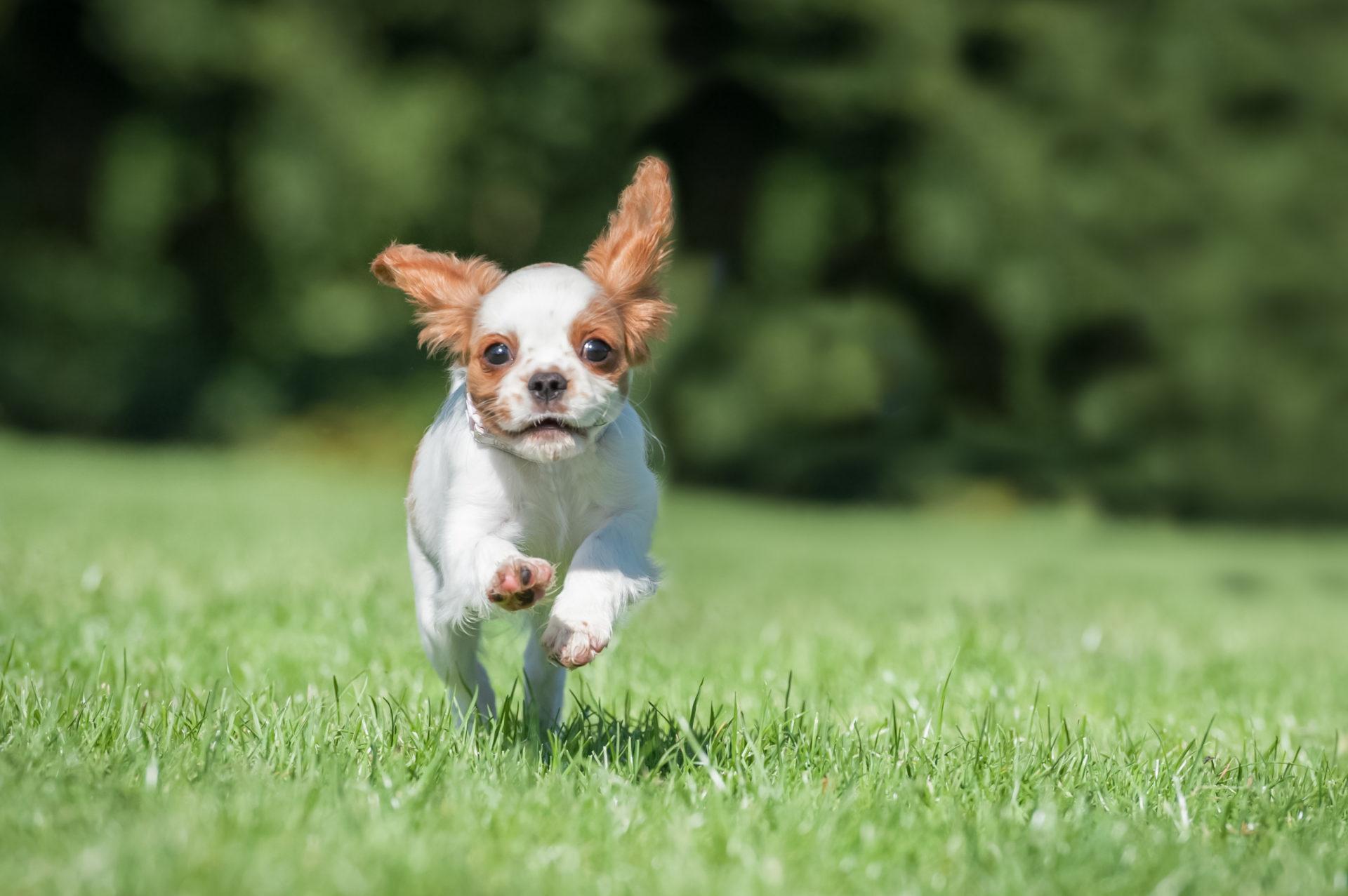 Effektiv ormekur til hund | Dyrlægehuset Kolding