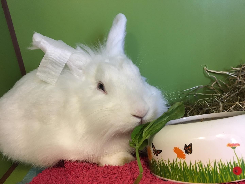 Behandling af parasitter i mave- og tarmkanal hos kanin | Dyrlægehuset Kolding