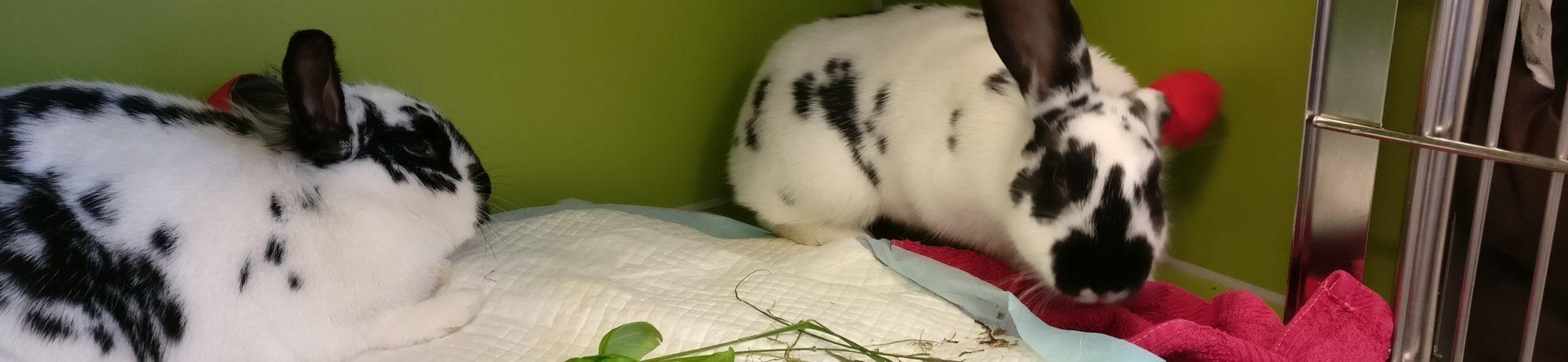 Sygdomstegn hos kanin – kend symptomerne | Dyrlægehuset Kolding