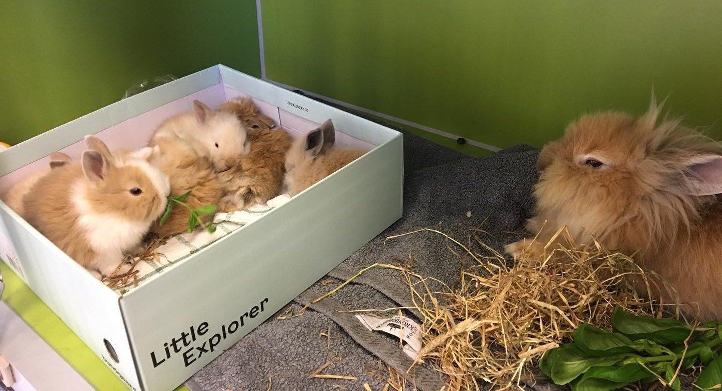 Kend symptomerne hos kanin (sygdom) | Dyrlægehuset Kolding