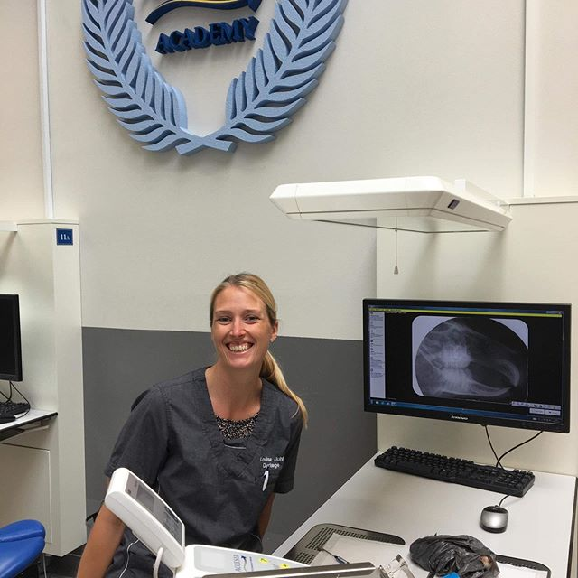 Symptomer på tandproblemer hos marsvin | Dyrlægehuset Kolding