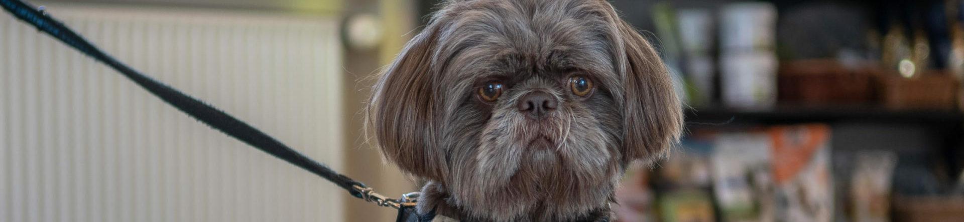 Hjertesygdomme og luftvejssygdomme hos hund og kat – Læs mere | Dyrlægehuset Kolding