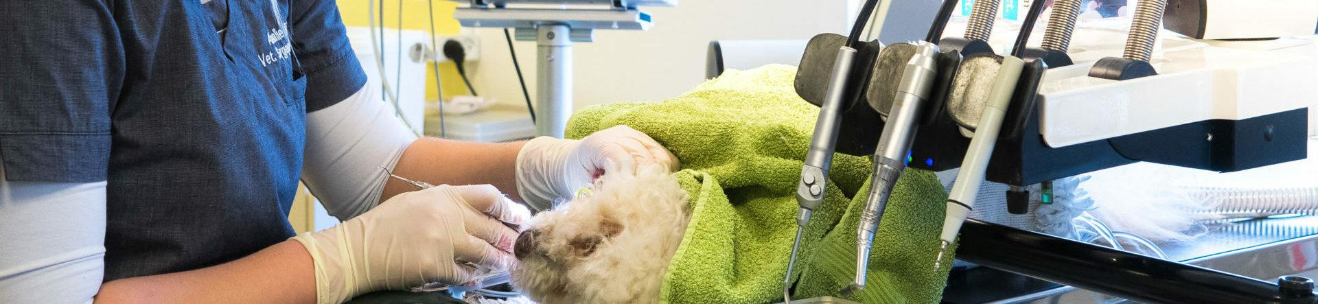 Tandbehandling af hund, kat og kanin – Bestil tid | Dyrlægehuset Kolding